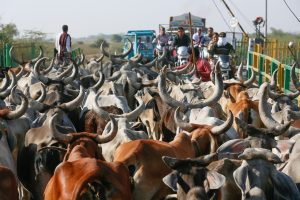 geloof in india