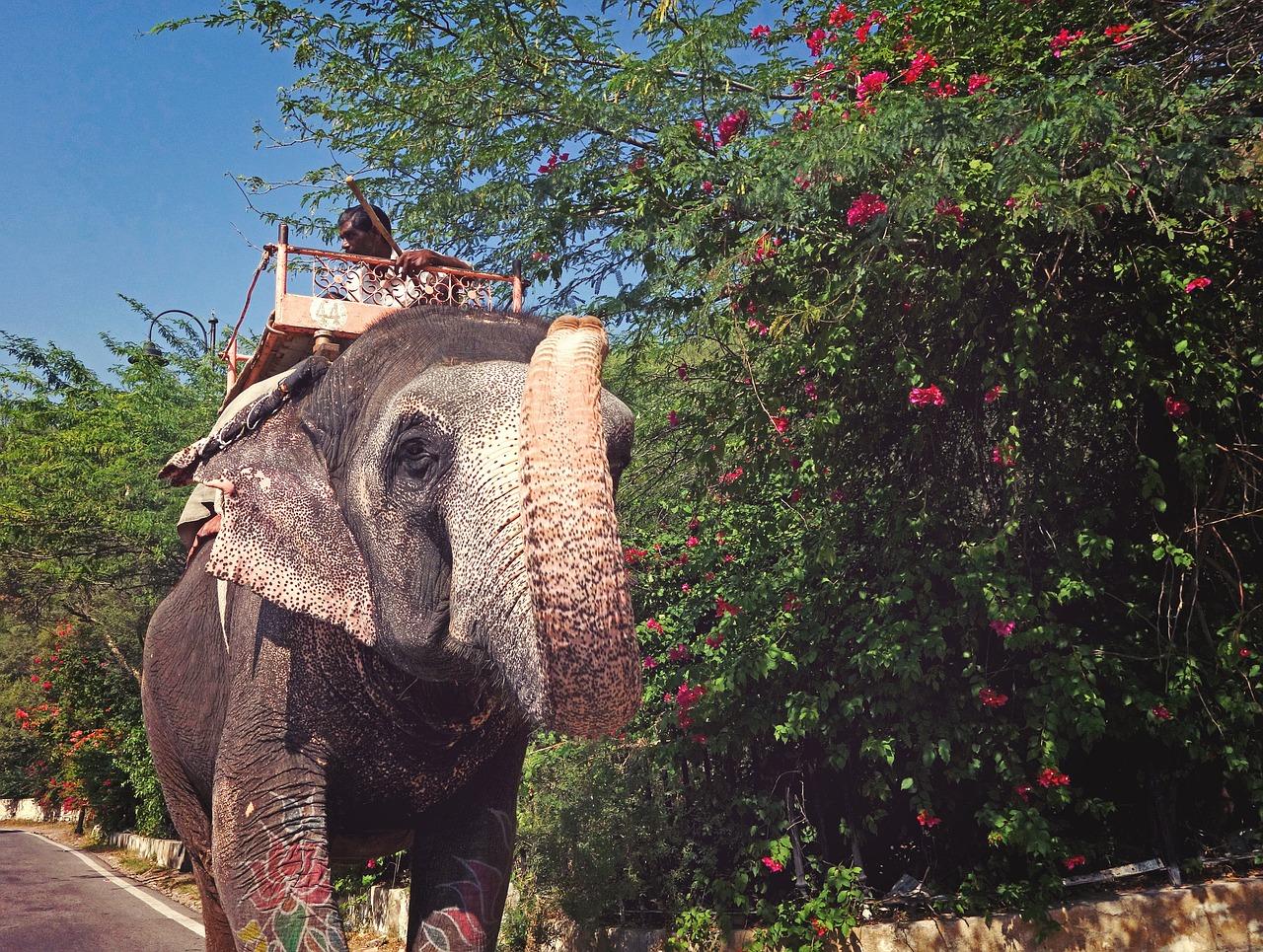 foto gekke olifant